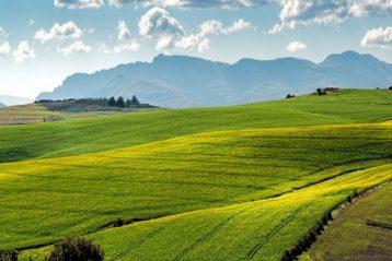 Tanah pertanian di Afrika Selatan boldafrica.com .ng  358x239 - Dikuatirkan Muncul Permasalahan Hukum Terkait Regulasi Tentang Penyitaan Tanah, di Afrika Selatan