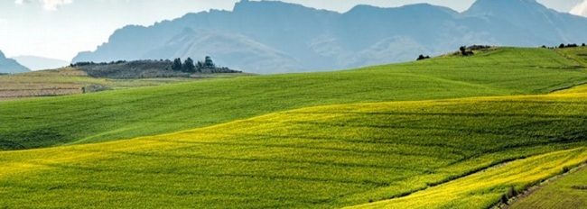 Tanah pertanian di Afrika Selatan boldafrica.com .ng  650x232 - Dikuatirkan Muncul Permasalahan Hukum Terkait Regulasi Tentang Penyitaan Tanah, di Afrika Selatan