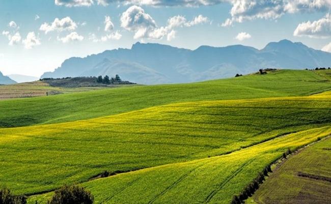 Tanah pertanian di Afrika Selatan boldafrica.com .ng  - Dikuatirkan Muncul Permasalahan Hukum Terkait Regulasi Tentang Penyitaan Tanah, di Afrika Selatan